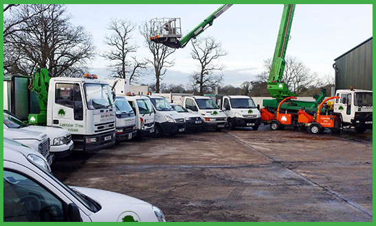 About Leinster Tree Services