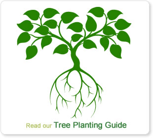 Tree Planting Guide Read