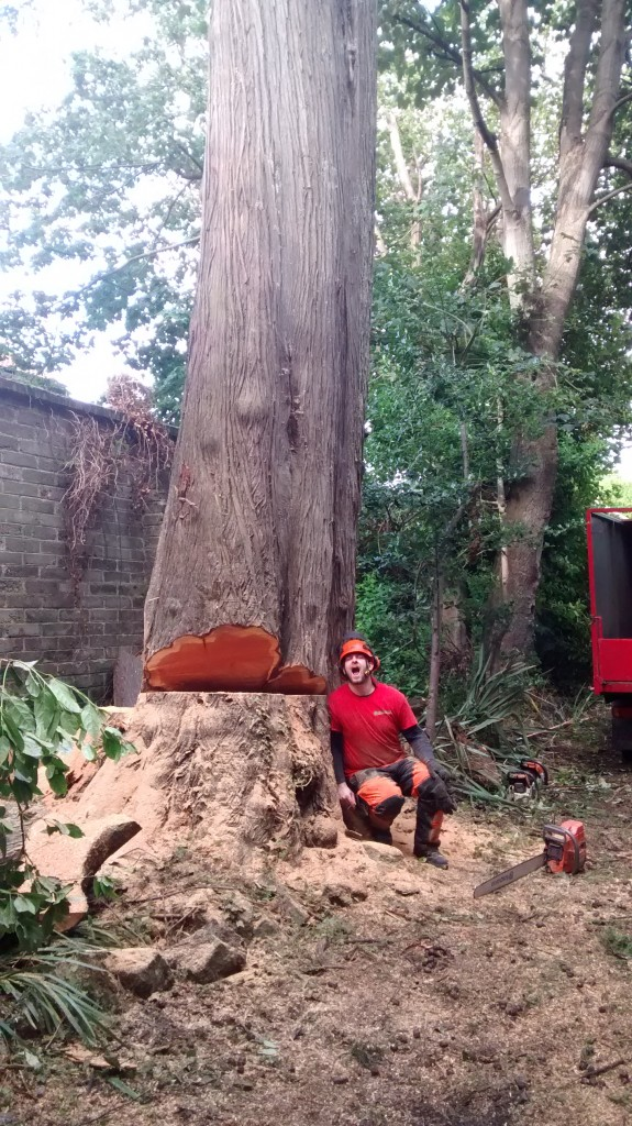 Tree Removal Trunk